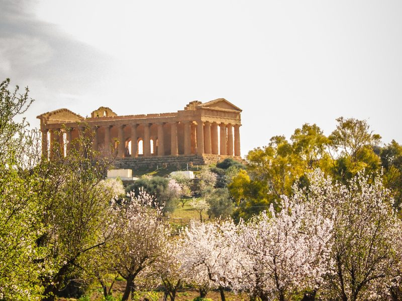 Almond Trees in Bloom at the Valley of Temples near Agrigento, Sicily